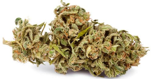 marijuana-bud-for-sale